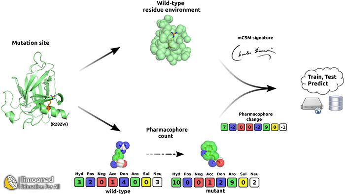 فیلم آموزش پیش بینی بیوانفورماتیکی تاثیر جهش در پایداری پروتئین ها